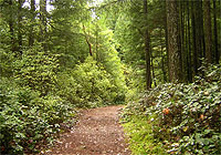 Mount Finlayson Goldstream Park